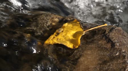 yaprak suda